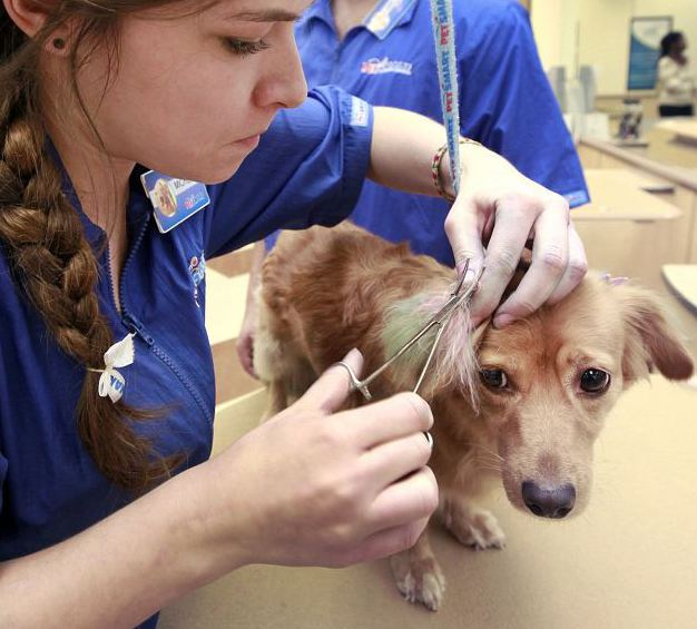 Petsmart Hours store image